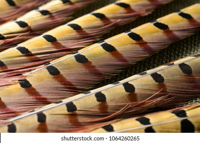 colorful feathers abstraction useful as background or wallpaper