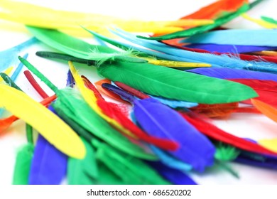 colorful feathers in the form of a border. isolated on white background