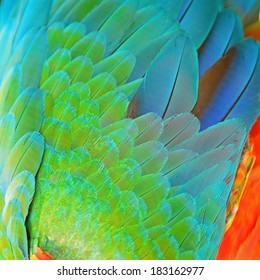 Colorful feathers, Harlequin Macaw feathers background texture