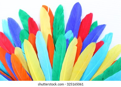 Colorful feathers isolated on white background