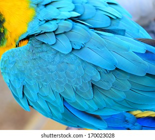 Colorful feathers, parrot macaw feathers background