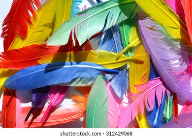 Colorful feathers, random feathers background texture, bright multi colour feather on white.