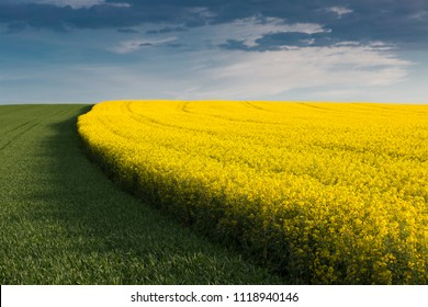 colorful field in the spring