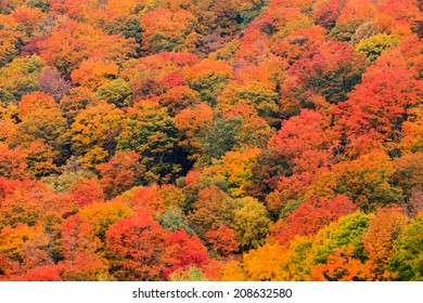 Colorful field of trees on the side of a mountain during fall foliage in Stowe Vermont, USA