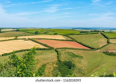 Colorful fields in Salcombe, UK