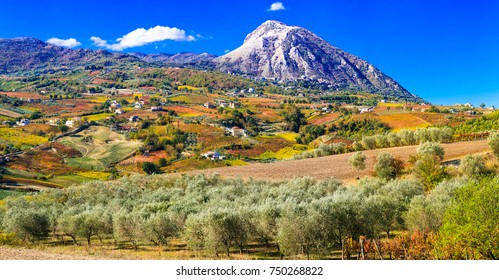 Colorful fields of vineayrds and olives trees in Benevento province. Italy