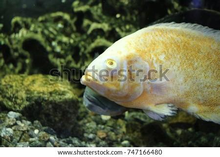Colorful Fish Aquarium Algae Home Stock Photo Edit Now 747166480