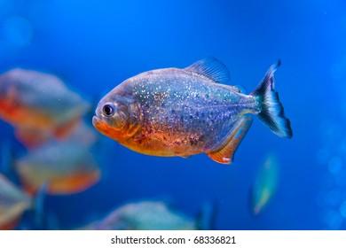 Colorful fish in aquarium saltwater world