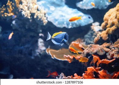 Colorful fish in blue water with stones. Close-up shot