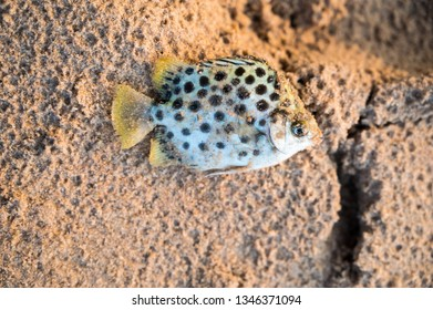 Colorful fish on sand