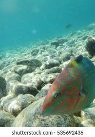 Colorful fish in the sea