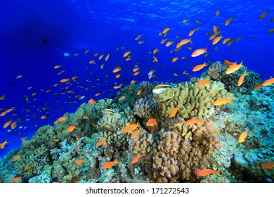 Colorful fish in the tropical reef of the red sea