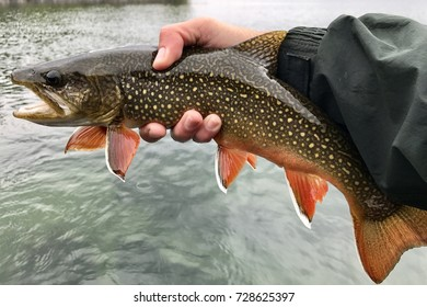 A colorful fish (trout), with fly in mouth being released into a lake by a fly fisherman
