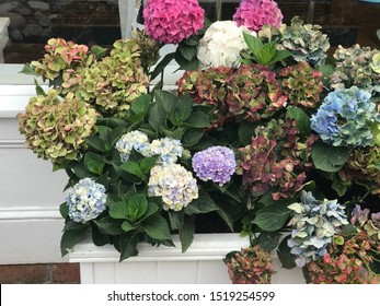 Colorful floral assortment in garden box
