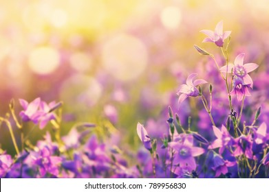 Colorful floral background with beautiful bells in the sunlight.