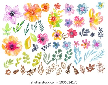 Colorful floral collection with flowers, leaves and berries for beautiful design