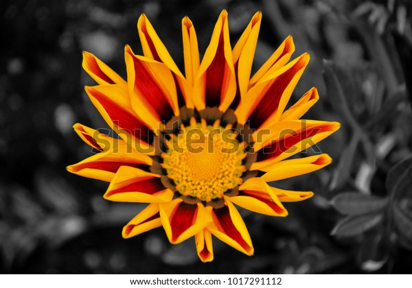 The colorful flower