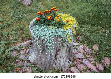Colorful flower bed on an old stump. Landscaping