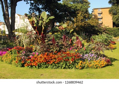 Colorful Flower Bed in Park with Small Colorfull Flowers Blooming around  Red Abyssinian Banana (Ensete Ventricosum Maurelii)