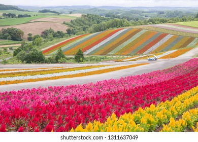 Colorful flower bed in summer of Furano, Hokkaido, Japan. The beautiful natural background