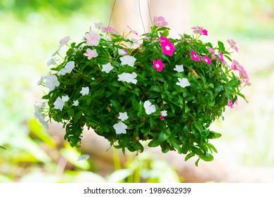 bunter Blumendekoration im Sommer