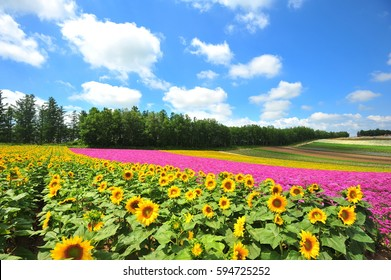 Colorful Flower Farm in Summer