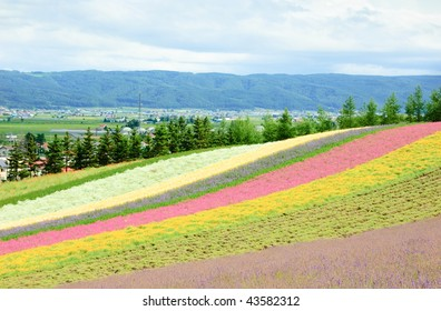 colorful flower field in japan