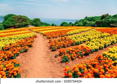Colorful flower field in Nokonoshima island park, Fukuoka, Japan