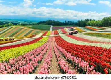 colorful flower field at Shikisai no oka farm,Biei,Hokkaido