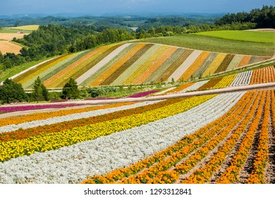 641902 Flower Flower Farm Images Royalty Free Stock Photos On