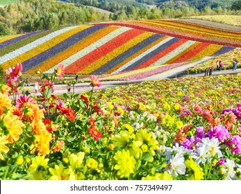 Colorful flower field in Shikisai-no-oka, Biei, Hokkaido, Japan
