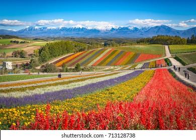 Colorful flower field,Hokkaido,Japan
