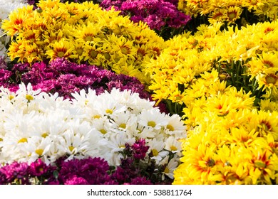 Colorful of flower garden