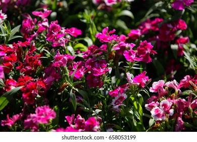 Colorful flower garden.