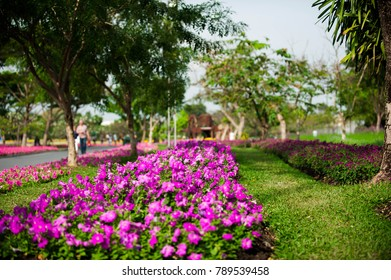 Colorful flower garden decorated in shady park