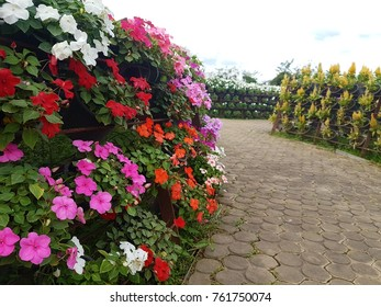 colorful flower in garden. flora view