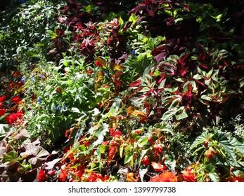 Colorful flower garden meadow in summer