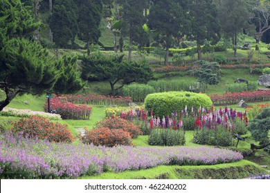 Colorful Flower Garden Outdoor