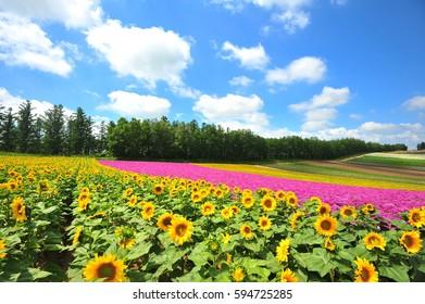 Colorful Flower Garden in Summer