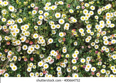 Colorful Flower Meadow background,daisy flowers