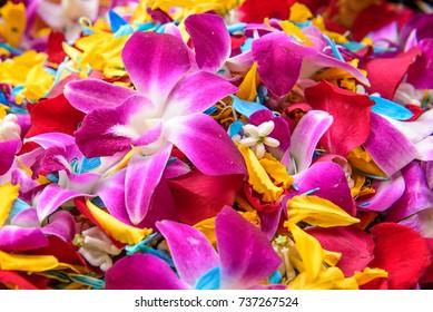 colorful flower petals background