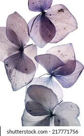colorful flower petals on white close up