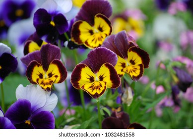 colorful flower smilies