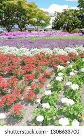 colorful flowerbed in a city park