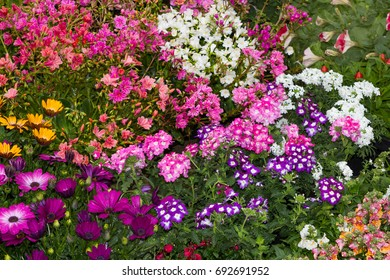 A colorful flowerbed with many differnt plants in a cottage garden.