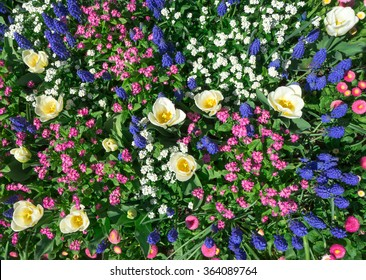 Colorful flowerbed in pink, blue and white in spring. Taken in closeup with a view from above.
