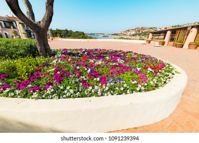 colorful flowerbed in Porto Cervo square, Costa Smeralda