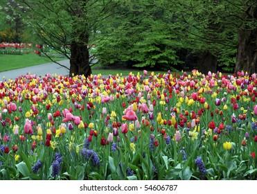 Colorful flowering