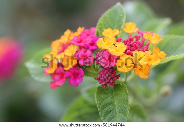 Colorful flowers