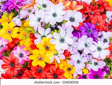colorful flowers abstract background